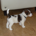Baci, JRT kennel van 't