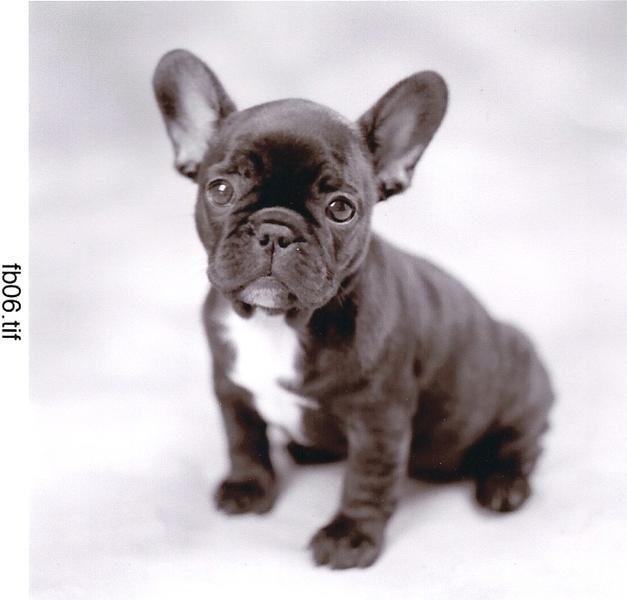 Honden foto: Franse Bu...