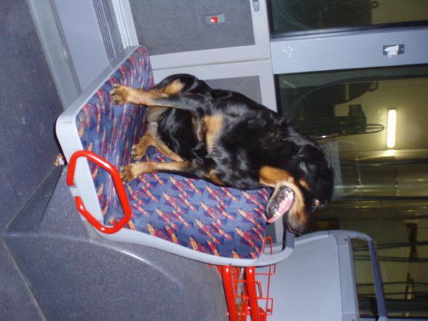 Honden fotowedstrijd: Met de bus mee