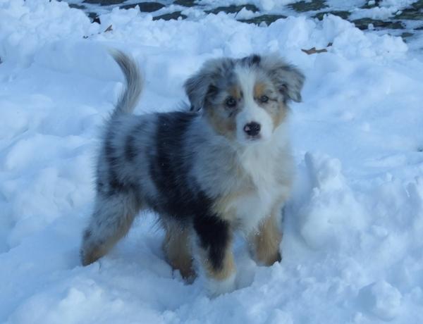 HondenPage Dogboek: kl...