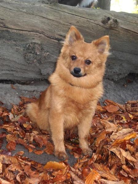 Honden Fotowedstrijd Vos In Het Bos