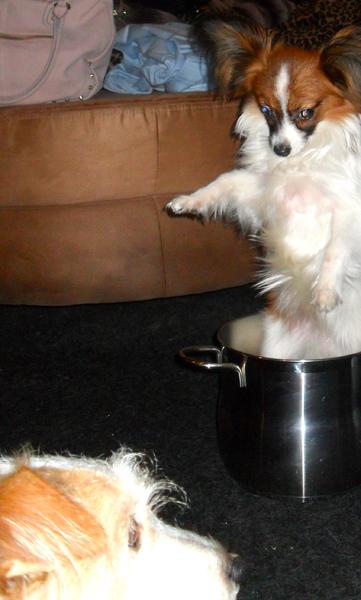 honden fotowedstrijd: de hond in de pot vinden