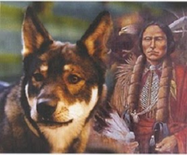 American Indian Dog