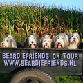 Beardiefriends