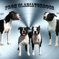 FROM GLADIATORDOGS