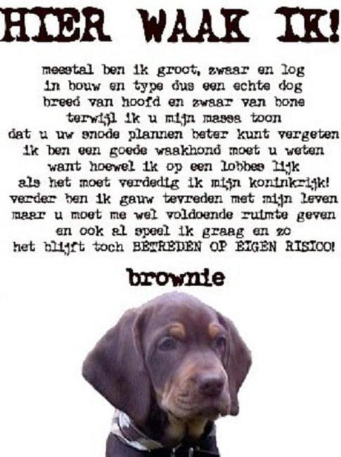 Mooie Honden Gedichten Pagina 2 Hondenforum
