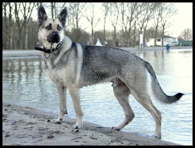 Mooie Kruisingen Pagina 4 Hondenforum