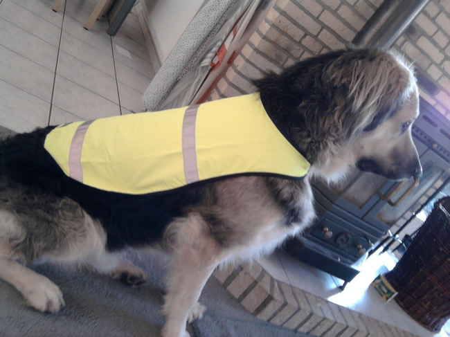 Hondenriem Met Licht : Hondenhalsband met licht bol led honden halsband lichtgevend met