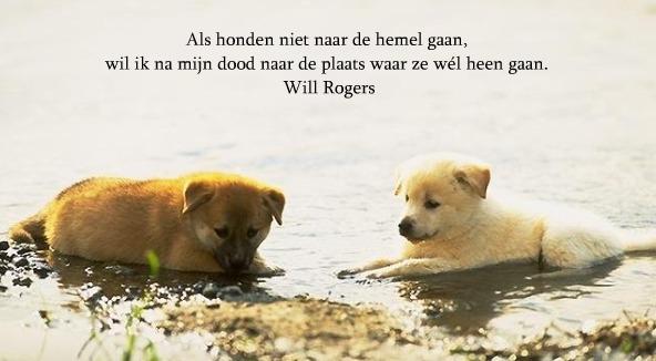 Citaten Over Honden : Citaten en gedichten over honden hondenforum
