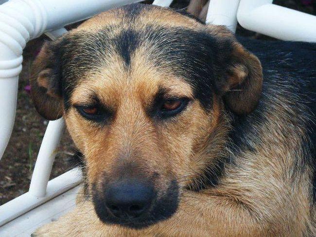 fotoalbum pleeghonden honden zonder toekomst