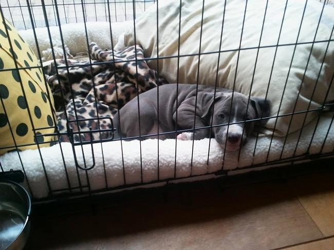 Bench Met Kussen : Amerikaanse stafford hondenforum
