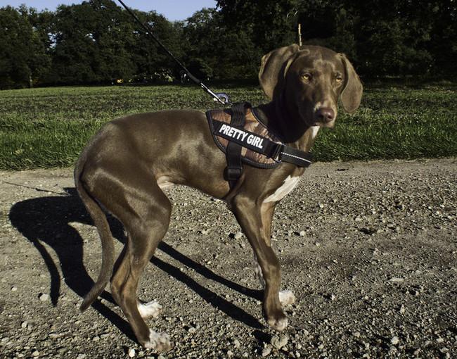 Julius k9 tuig hondenforum - Winkel mellow geel ...