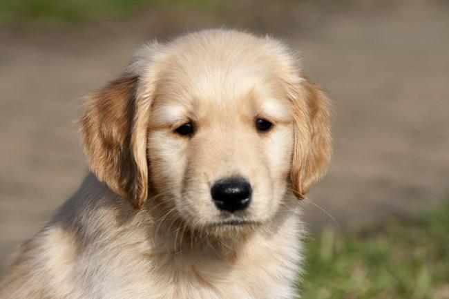 Iets Nieuws Foto'S Van Honden DW82 | Belbin.Info #OE26