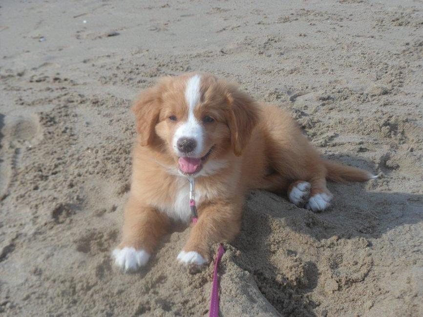 schattige hondenrassen quotes Success