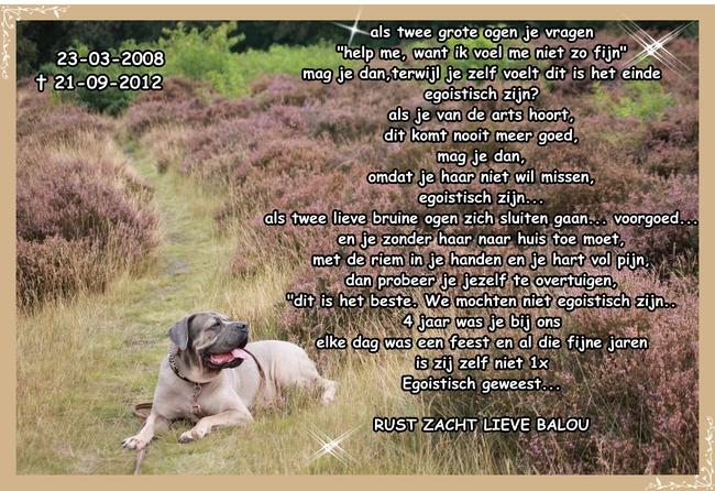 Citaten Over Honden : Mooie teksten hond paulaclaudiakeren site