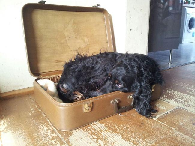Koffers liggen veel lekkerder hondenforum - Mand een machine huis ter wereld ...