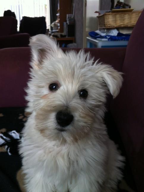 Fijne 2e Verjaardag Lieve Mecx Hondenforum
