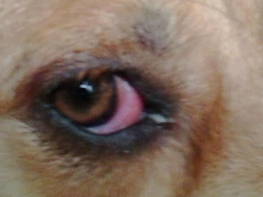 ooglid opgezwollen boven