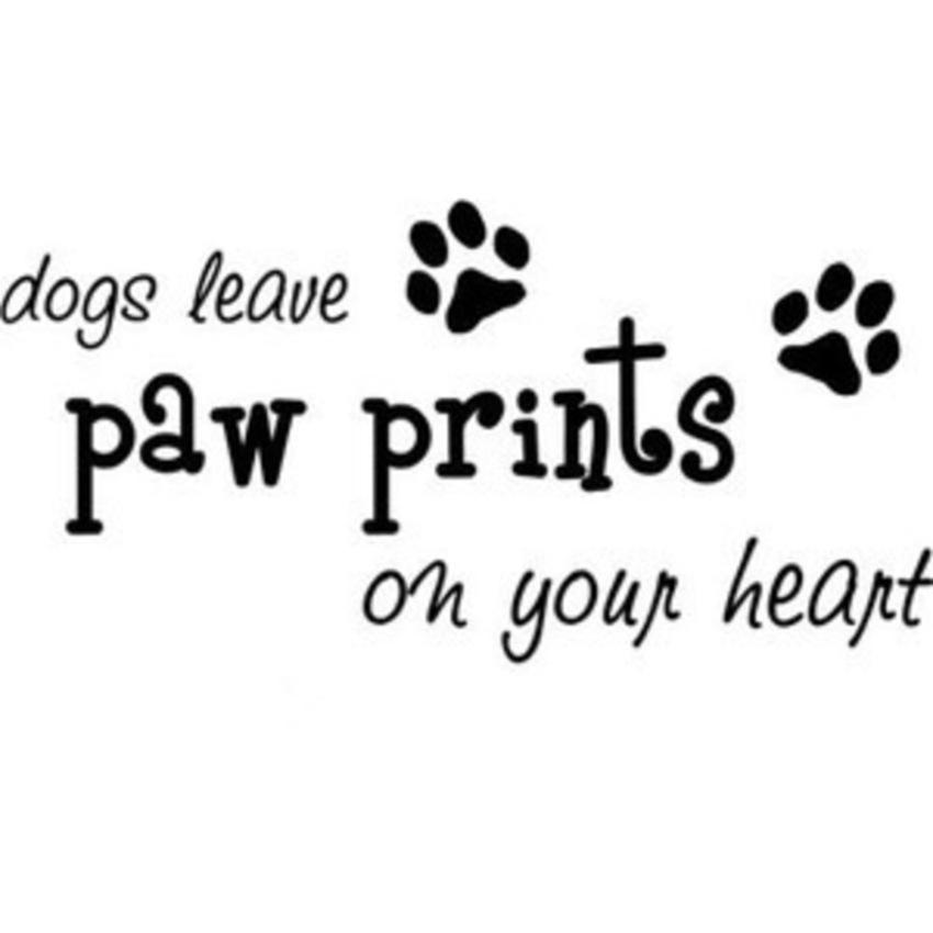 Magnifiek Hebben afscheid moeten nemen van onze hond... - Pagina 2 - www #TV95