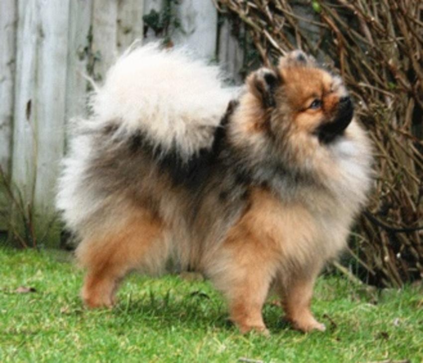 welke hond past bij ons hondenforum