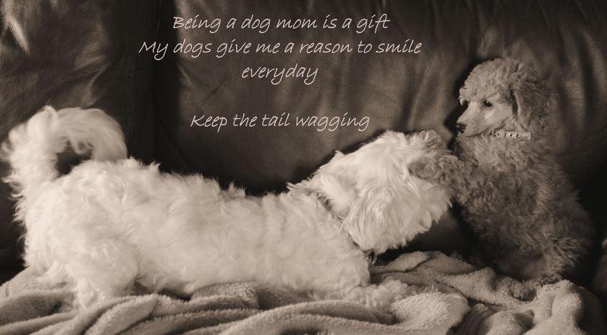 Citaten Over Honden : Wat brengt je hond jou hondenforum