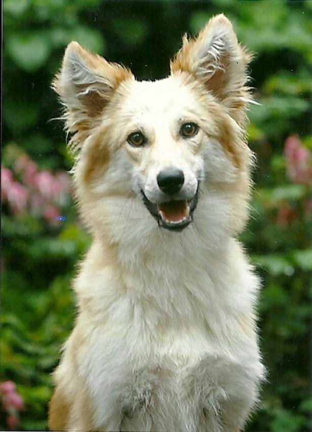 Wat Lijkt Jou Een Leuke Kruising Pagina 3 Hondenforum
