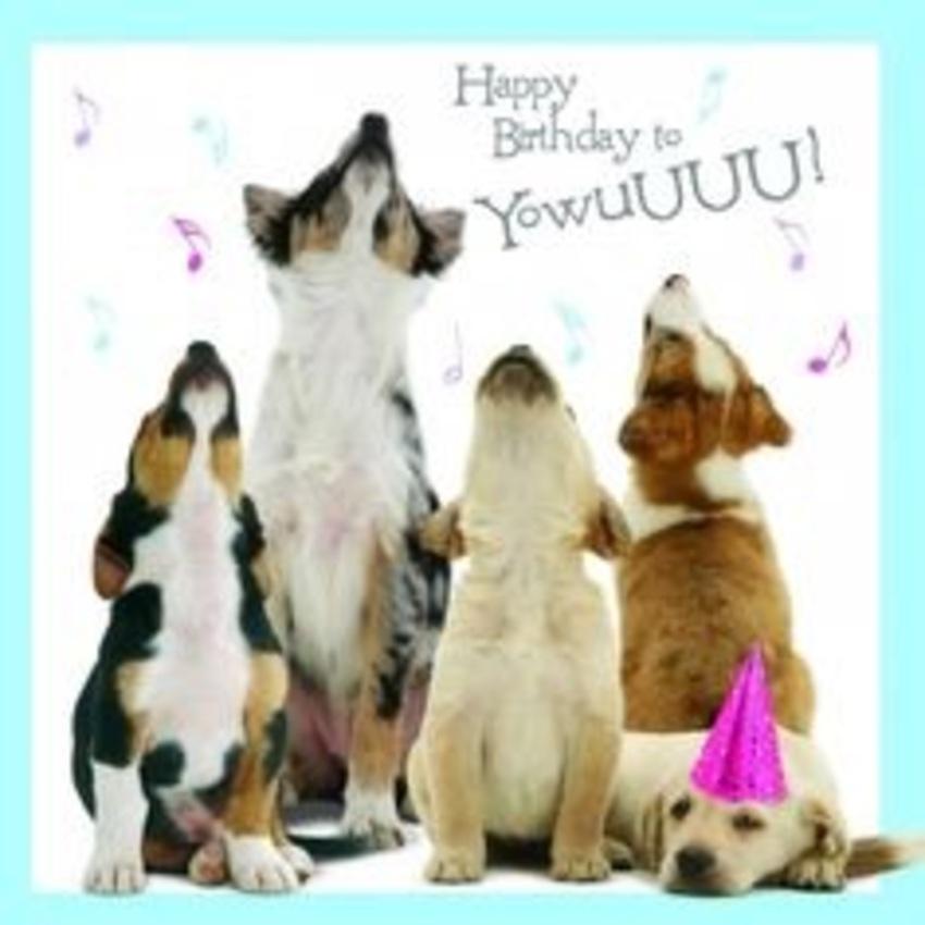 Saartje 4 jaar!   HondenForum