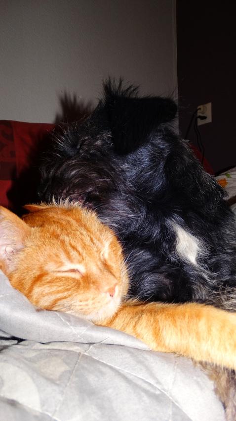 warme oortjes kat