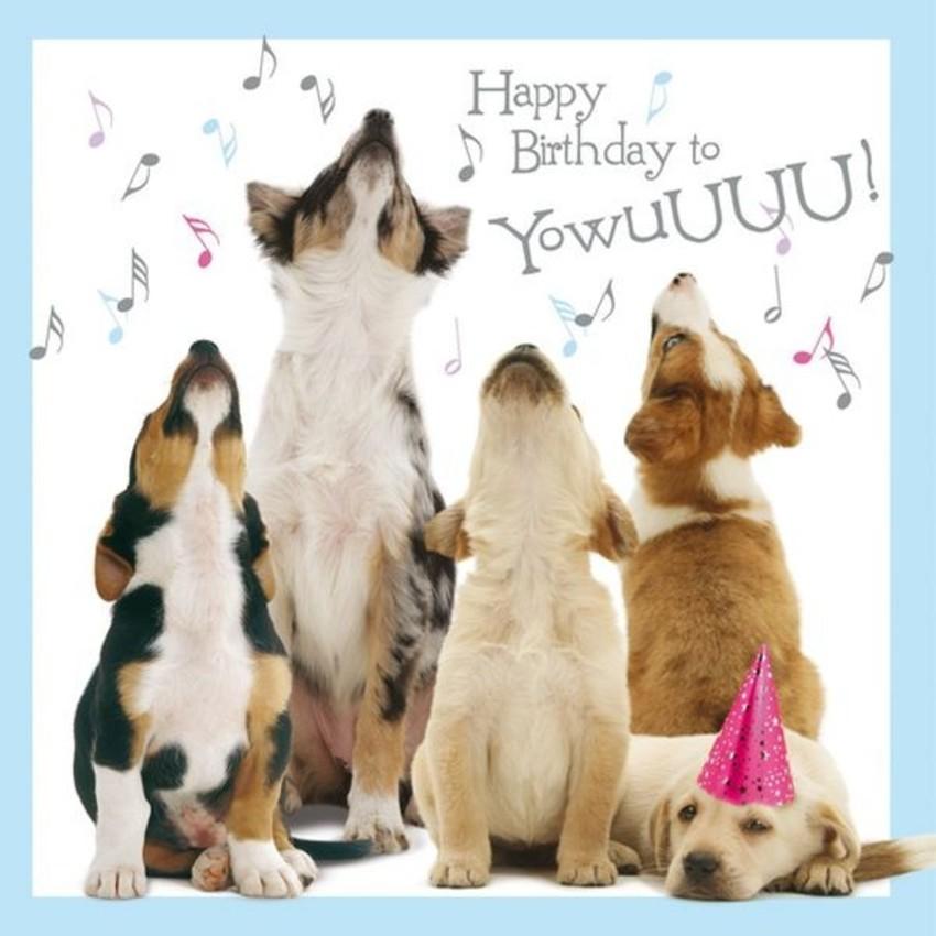 Hoera! Charlie 1 jaar! | HondenForum