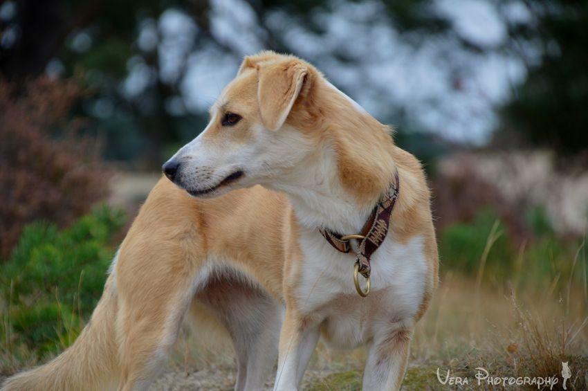organisatie herplaats honden