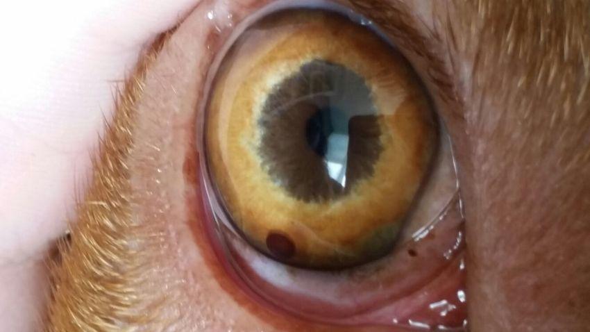 Vlekje In Iris Hondenforum