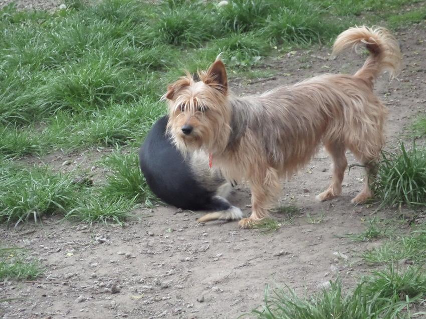 Nieuwe opvanger | HondenForum