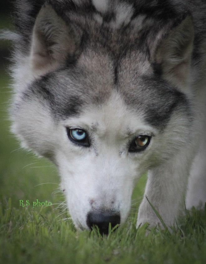 twee verschillende kleuren ogen