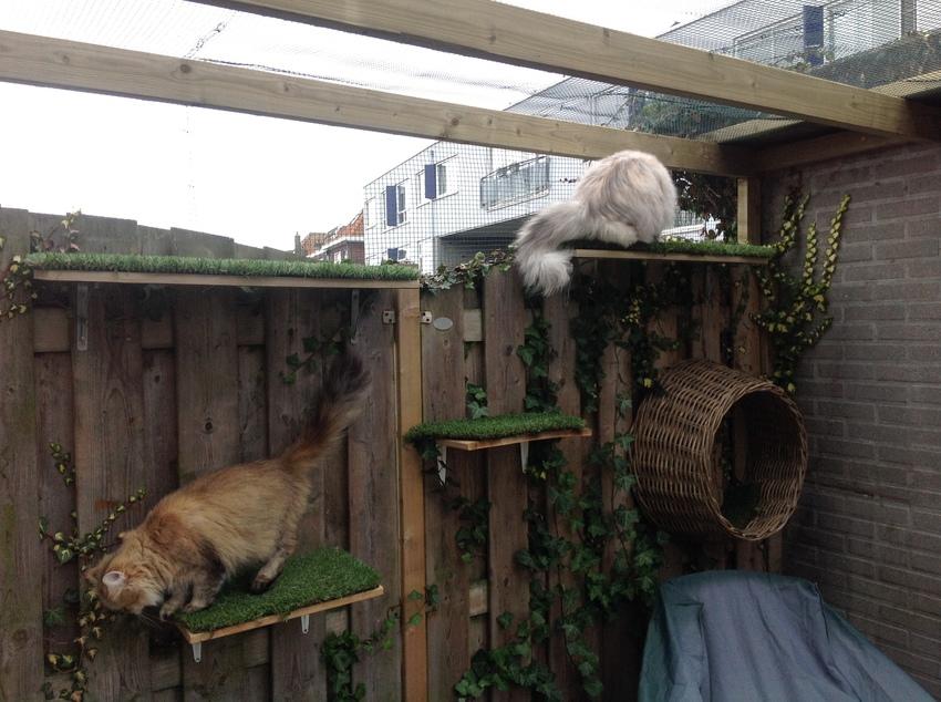 Kattenstront In Tuin : Kattenpoep in de tuin unique kattenpoep in de tuin best tuin