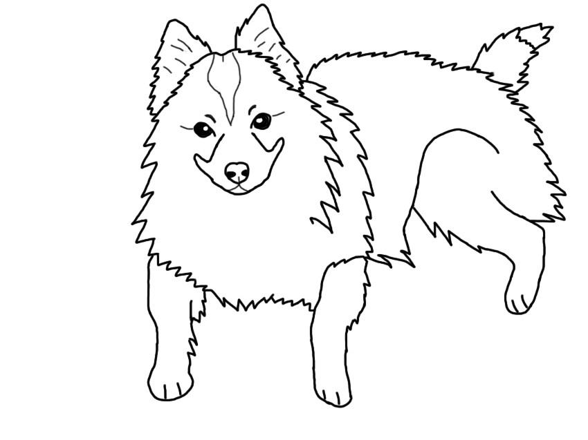 honden tekenen (computer) - weer tekeningen - pagina 6 | hondenforum