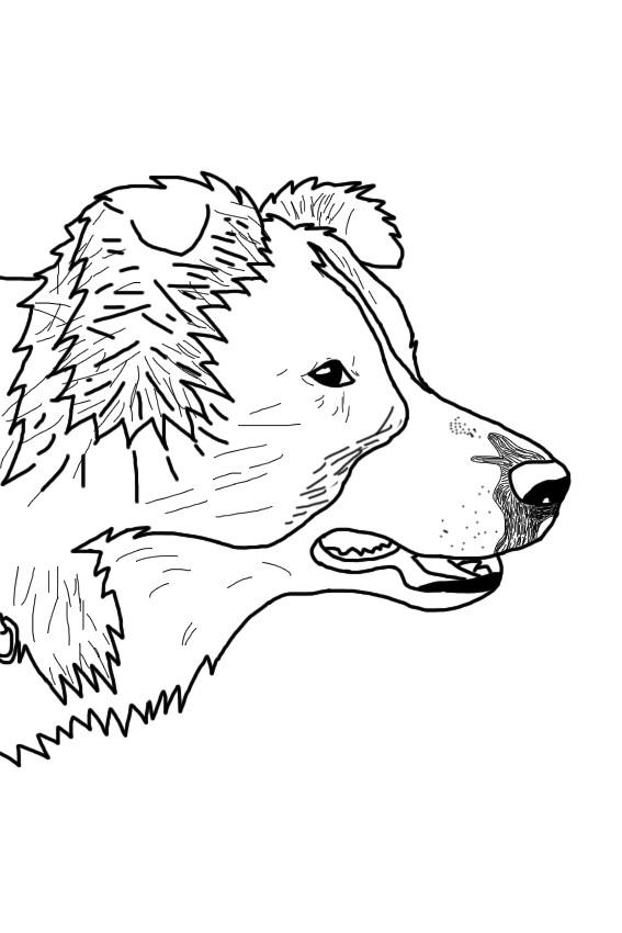 honden tekenen (computer) - weer tekeningen - pagina 9 | hondenforum