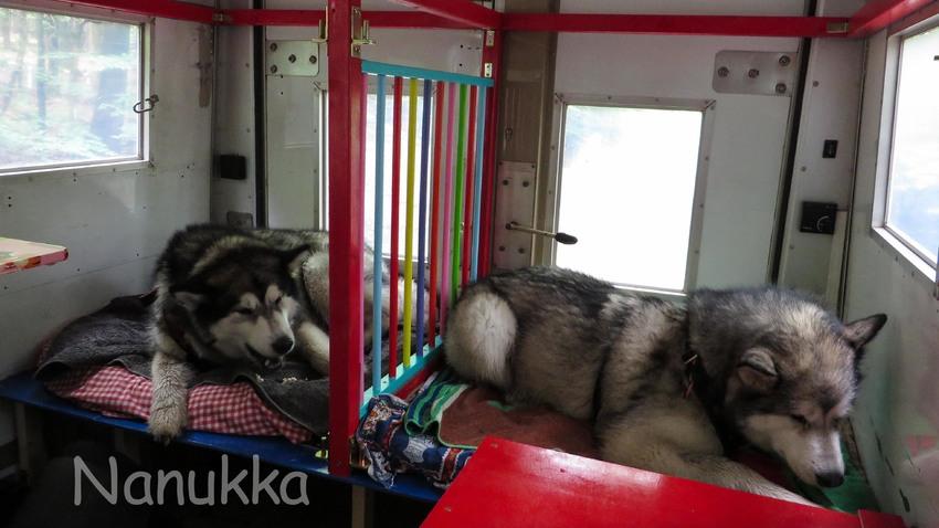 honden autodeken voor 4 deurs auto