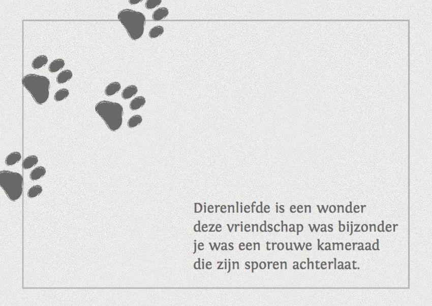 Gedicht Voor Overleden Hond Hondenforum