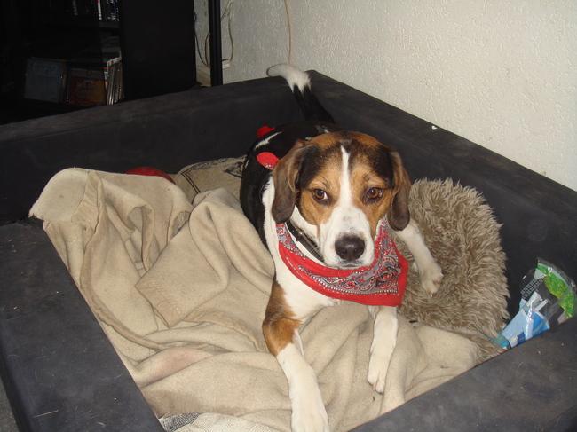 hond in de pot vinden? nee hoor wel een boerenzakdoek o-) | hondenforum