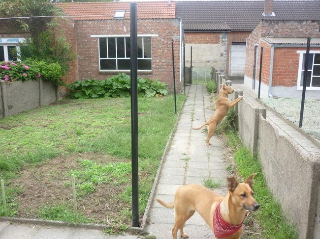 Tuin Afzetten Kat : Tuin afzetten voor hond u potplanten buiten schaduw