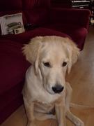 Gedichten Over Overleden Huisdieren Pagina 2 Hondenforum