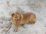 honden foto van Ria