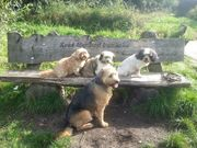 honden foto van liesbeth,Turbo,Luna, Levi en Faith