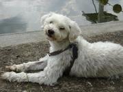 Honden Page profiel