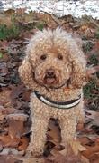 honden foto van Loesje