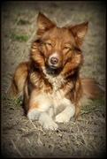 honden foto van Marit
