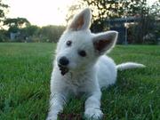Spiksplinternieuw Citaten en gedichten over honden | HondenForum LO-78