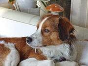 honden foto van Karin, Lucky* en Duke*