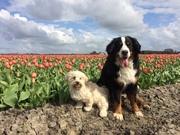 honden foto van Ilse met haar schatjes: Binny & Stoetel
