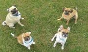 honden foto van Nori, Chewy & Ayla